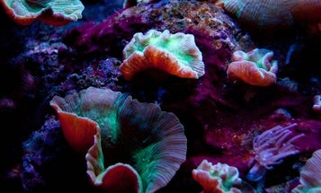 Swarms of Scottish Robots Will Find and Heal Damaged Coral
