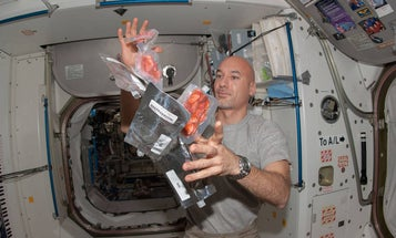 Astronauts lose weight in space, and it might be because their food is literally floating around inside them