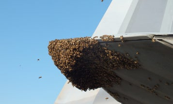 Best Fighter Jet In History Grounded By Bees