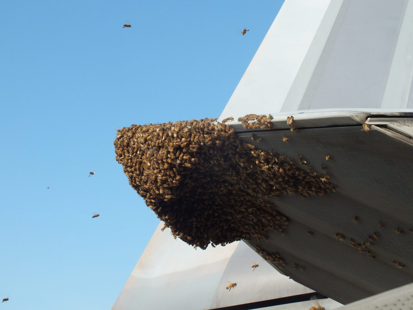 Bees On An F-22