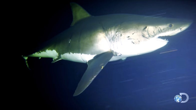 Watch The First Video Of A Shark Napping