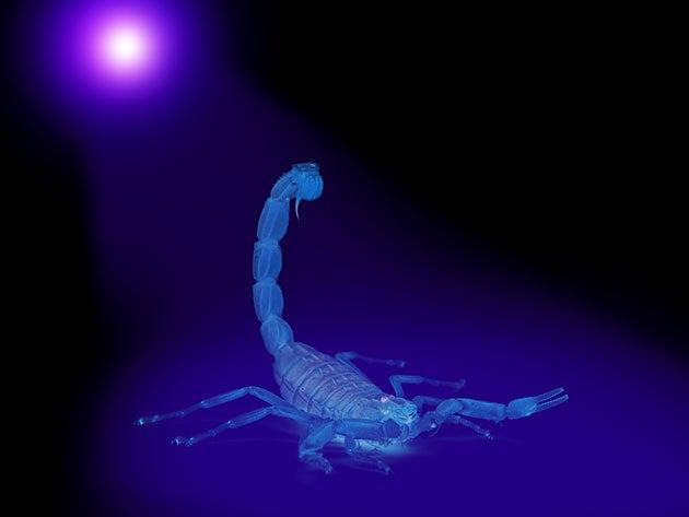 Explore hidden worlds with this handy UV flashlight