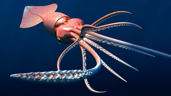 Colossal Squid Revealed