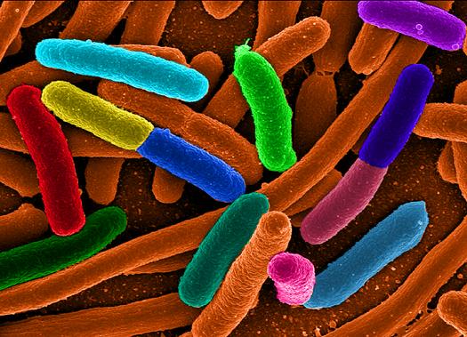 Biostorage Scheme Turns E. Coli Bacteria into Hard Drives