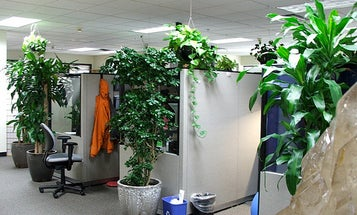 5 Things: Make Your Office More Eco-Friendly