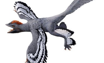 Lasers reveal the secrets of a feathered dinosaur fossil
