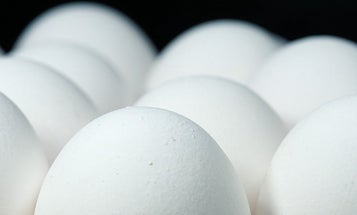Egg whites could help power a clean-energy future