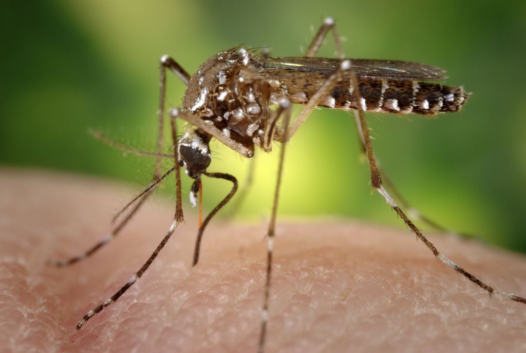 You could get both Zika and chikungunya from one stupid mosquito bite