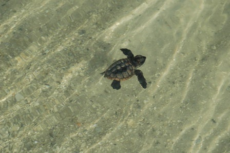 NASA Will Rescue Thousands of Sea Turtle Eggs from Oil Leak Areas