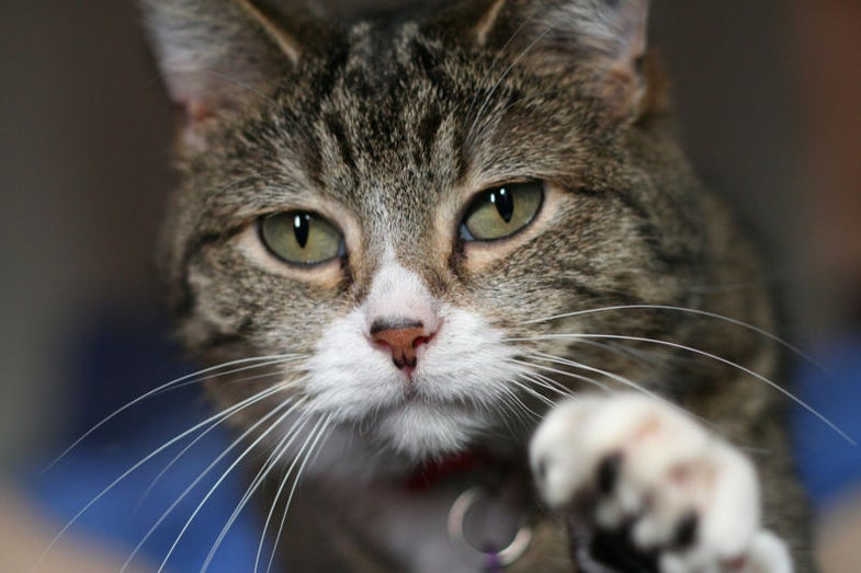 11 Reasons Why Cat Bites May Be Linked To Depression