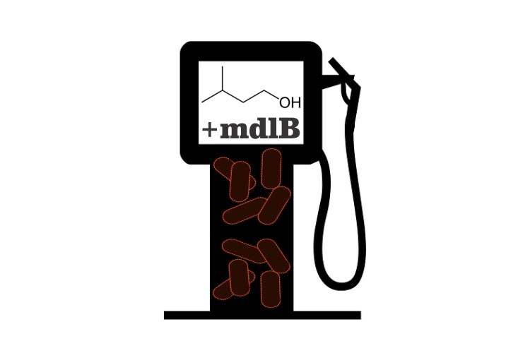 Pumping Up A Gene For More Gasoline