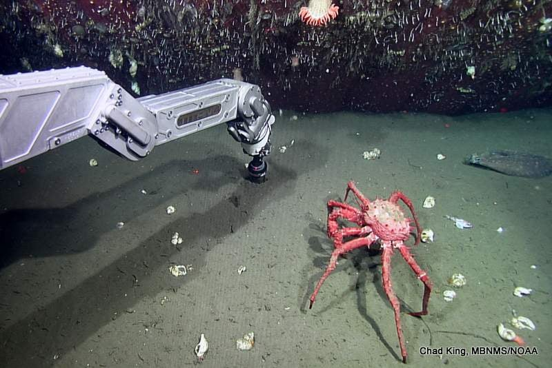 ROV Heads To Seafloor To Explore Lost Shipping Container
