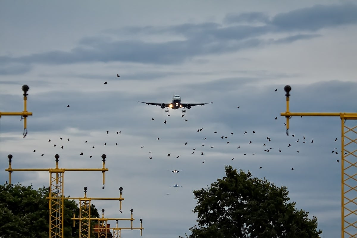 Could Drones Pose A Threat To Airplanes?