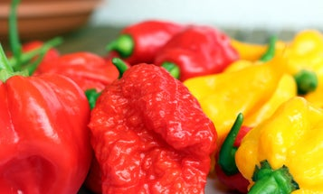 This guy ate a pepper so hot doctors thought he might be having an aneurysm