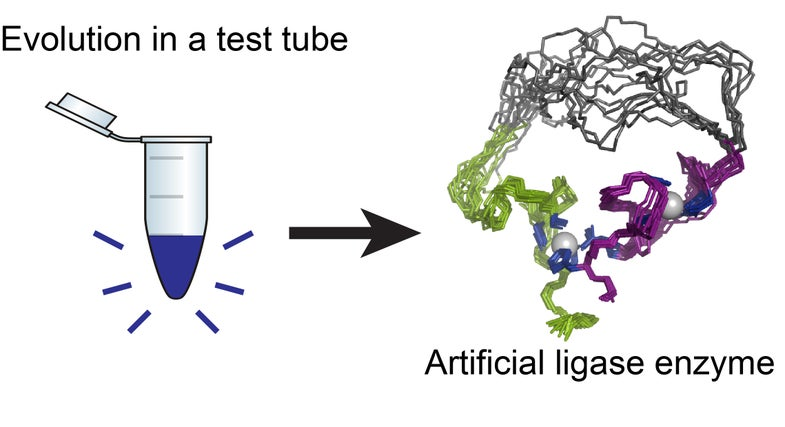 Controlled Evolution In A Test Tube Produces Artificial Enzymes