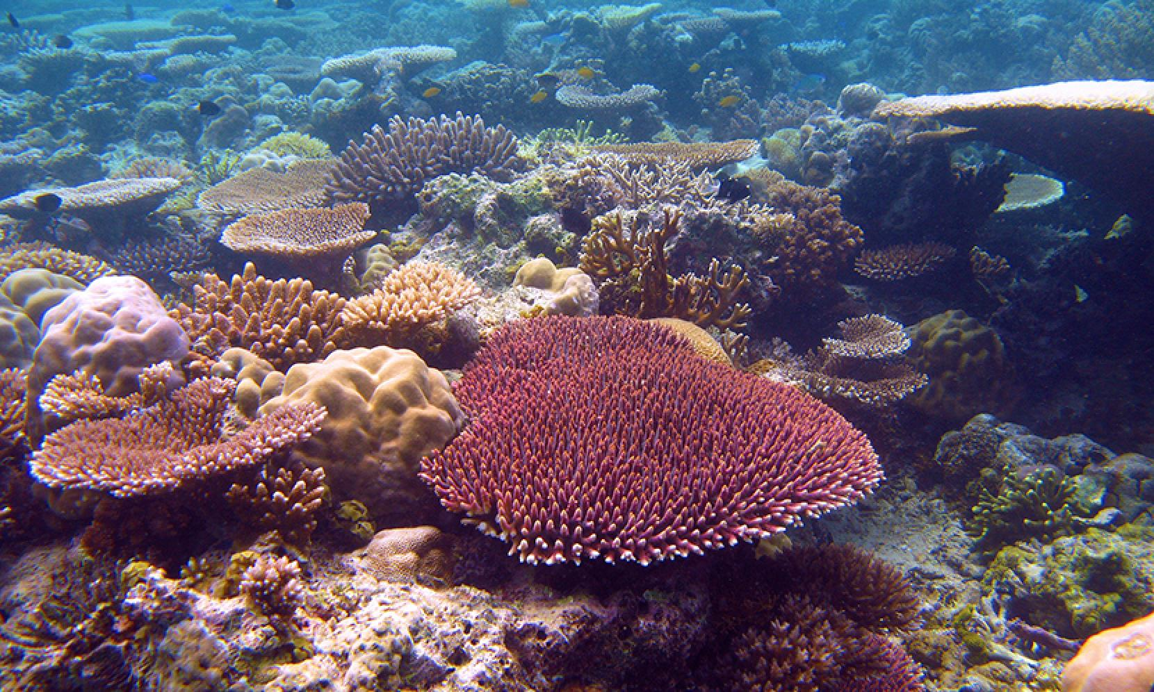 There's still time for us to save the Great Barrier Reef