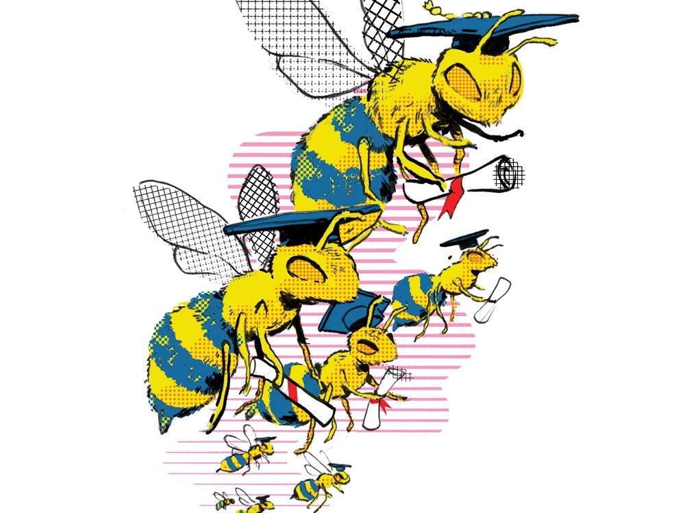 graduating bees