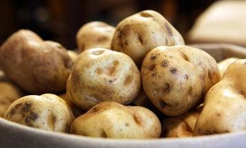 Scientists Reveal The Cause Of The Irish Potato Famine