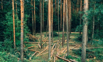 We Could Be Making Many Household Products From Wood, Not Oil