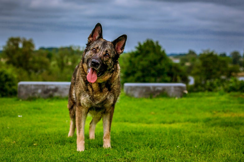 Scientists Hope To Extend Your Dog's Life With Anti-Aging Pill