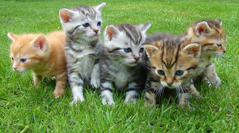 One orange kitten, two grey kittens, two brown kittens