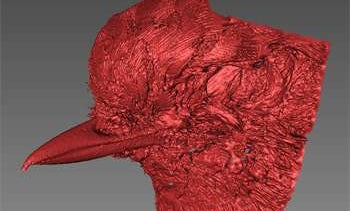 Researchers Seek Citizen Scientists To Scan The Beaks Of Every Bird Species On The Planet