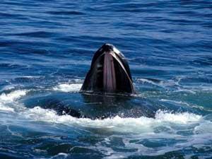 Whales Don't Kill Fish, People Kill Fish