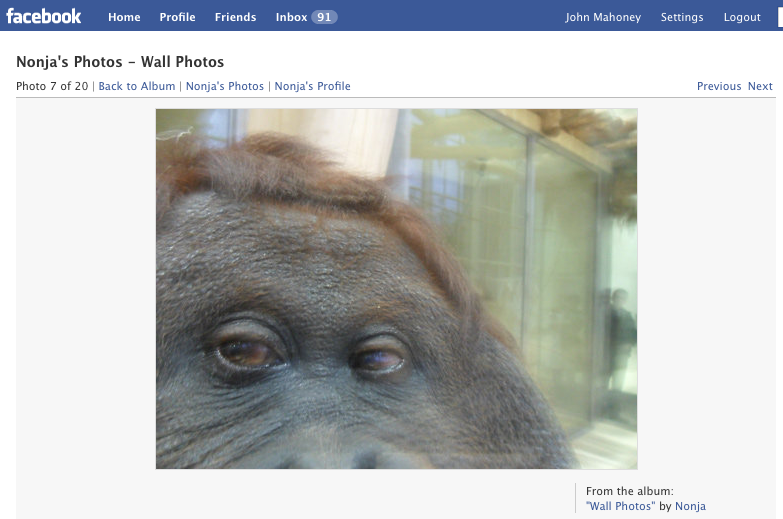 Nonja the Orangutan Tagged a Photo Of You On Facebook