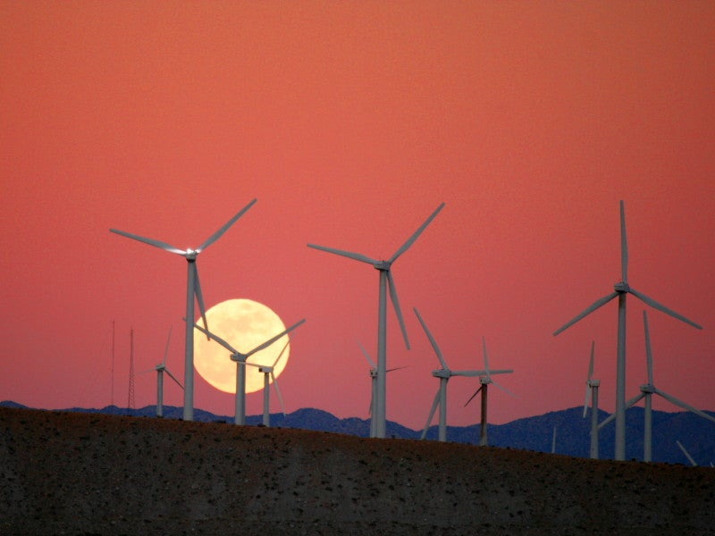 Increasing Wind Turbine Turn-On Speeds Could Help Reduce Bat Deaths, New Study Says