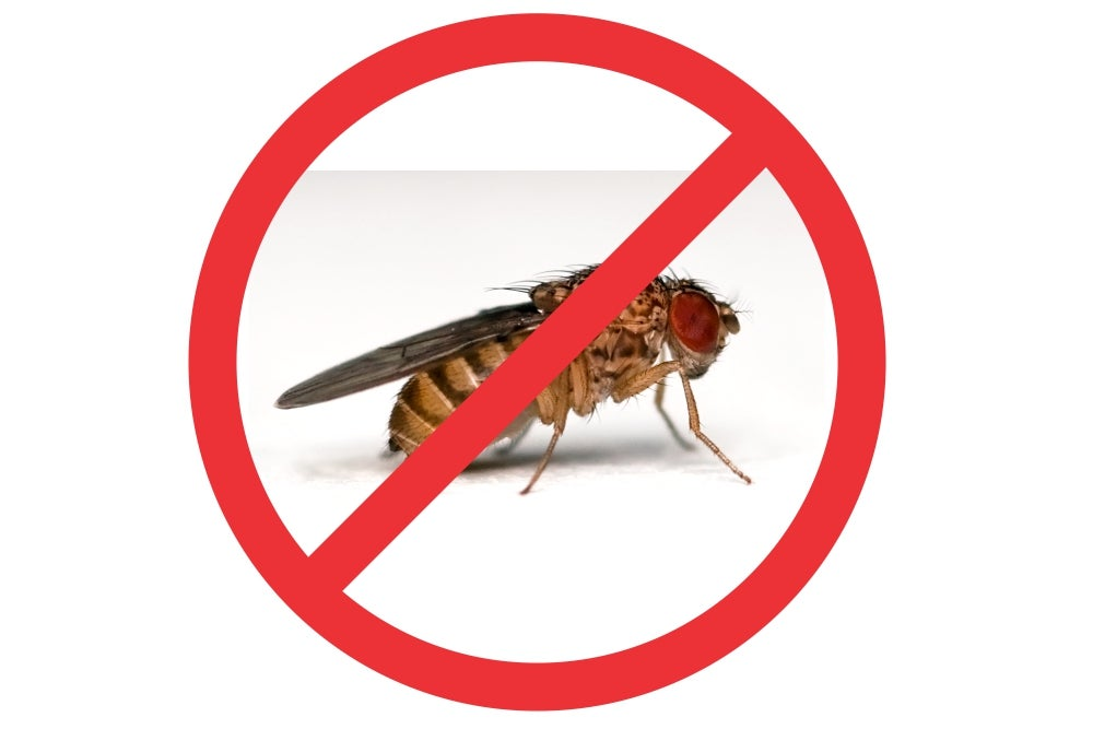Can We Build A Better (Fruit) Fly Trap