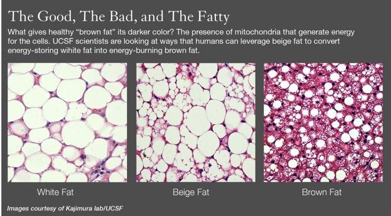 httpswww.popsci.comsitespopsci.comfilesbeige-fat-infographic.jpg