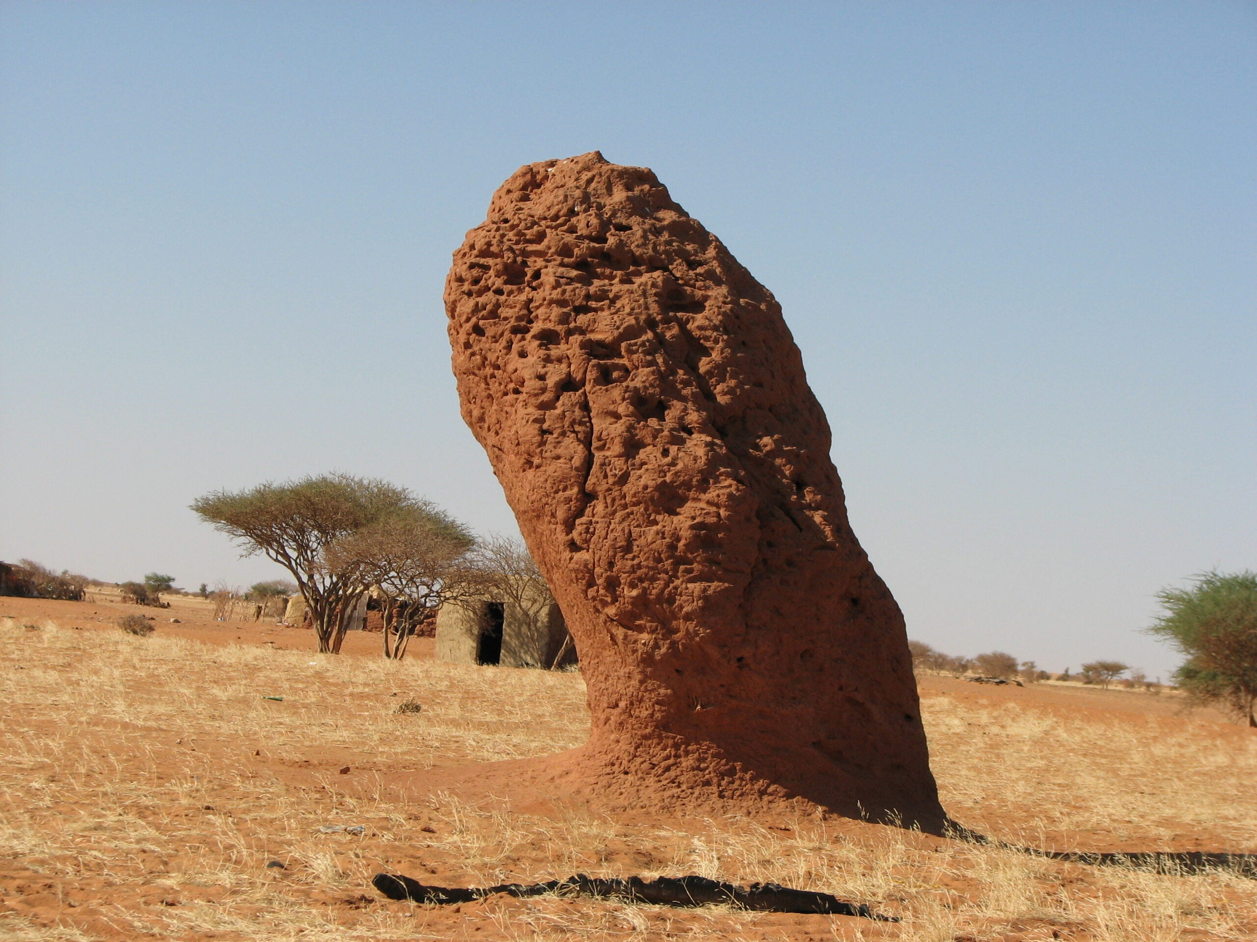Termites Engineer Solar-Powered Ventilation Into Their Mounds