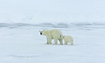 Russia Is Ready to Plunge Into Risky Arctic Drilling Projects, In Partnership With BP