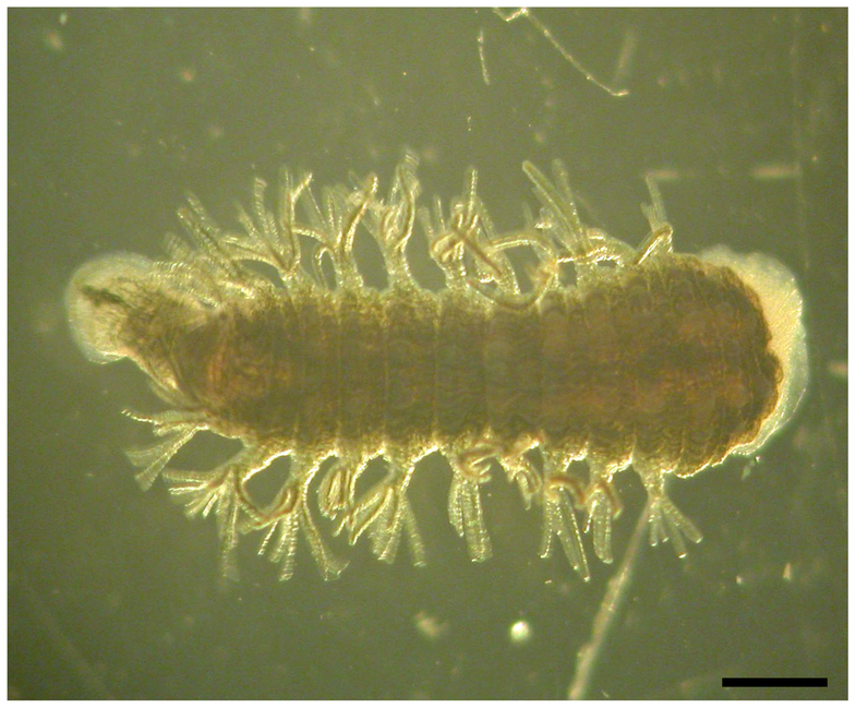 This Leech Can Survive A 24-Hour Submersion in Liquid Nitrogen