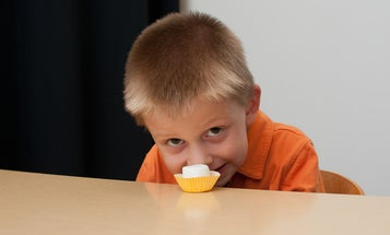 New Version of Classic Marshmallow Experiment Upends Original Conclusions