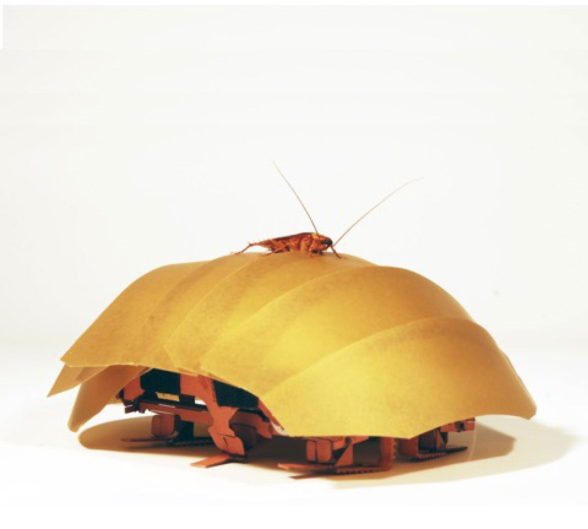 This Roach-Inspired Robot Crawls Even When Squished