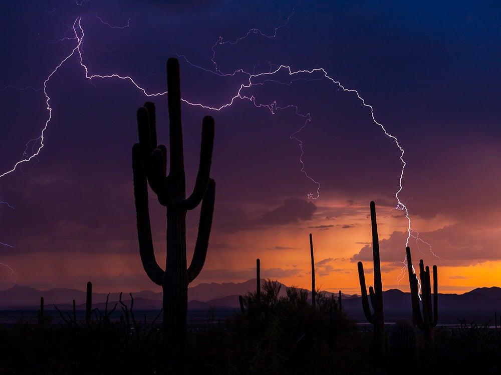httpswww.popsci.comsitespopsci.comfilesimages201806lightning-behind-desert-cactus.jpg