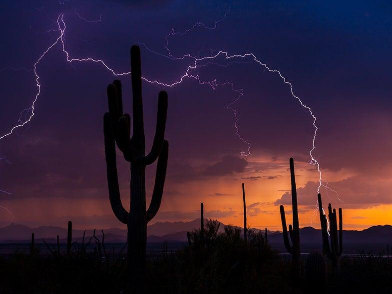 lightning behind desert cactus