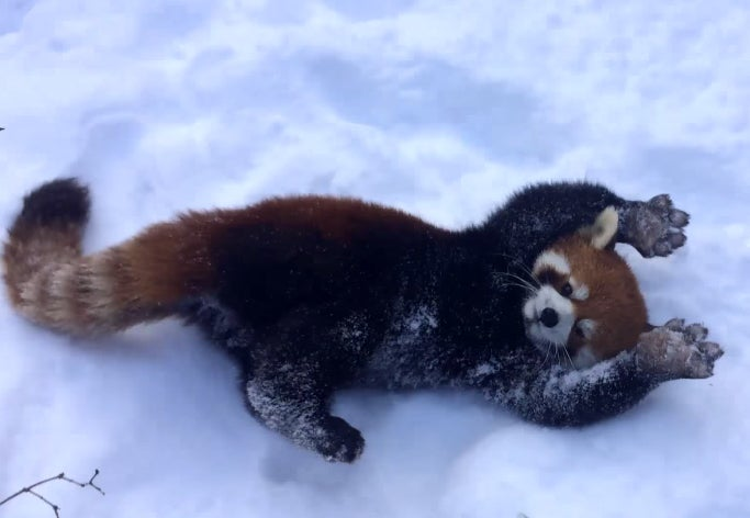Frozen Facades, Frolicking Red Pandas, And Other Amazing Images Of The Week