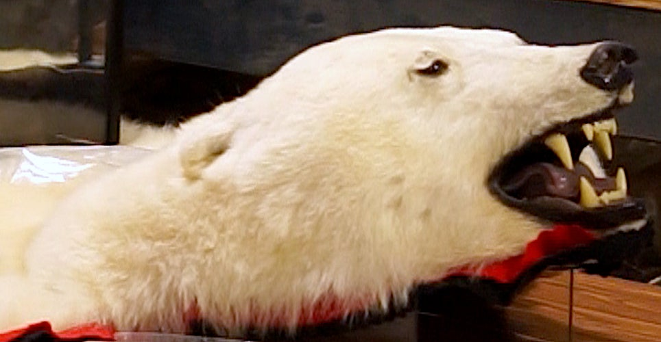 A stuffed polar bear