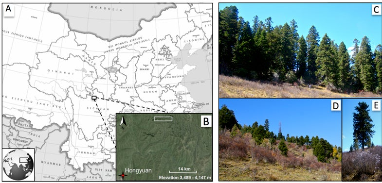 Forests On The Tibetan Plateau May Be Growing Faster Thanks To Climate Change