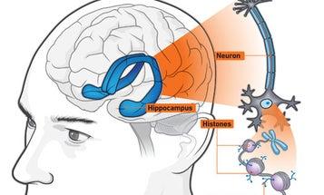 Instant Expert: Rebuilding Human Minds