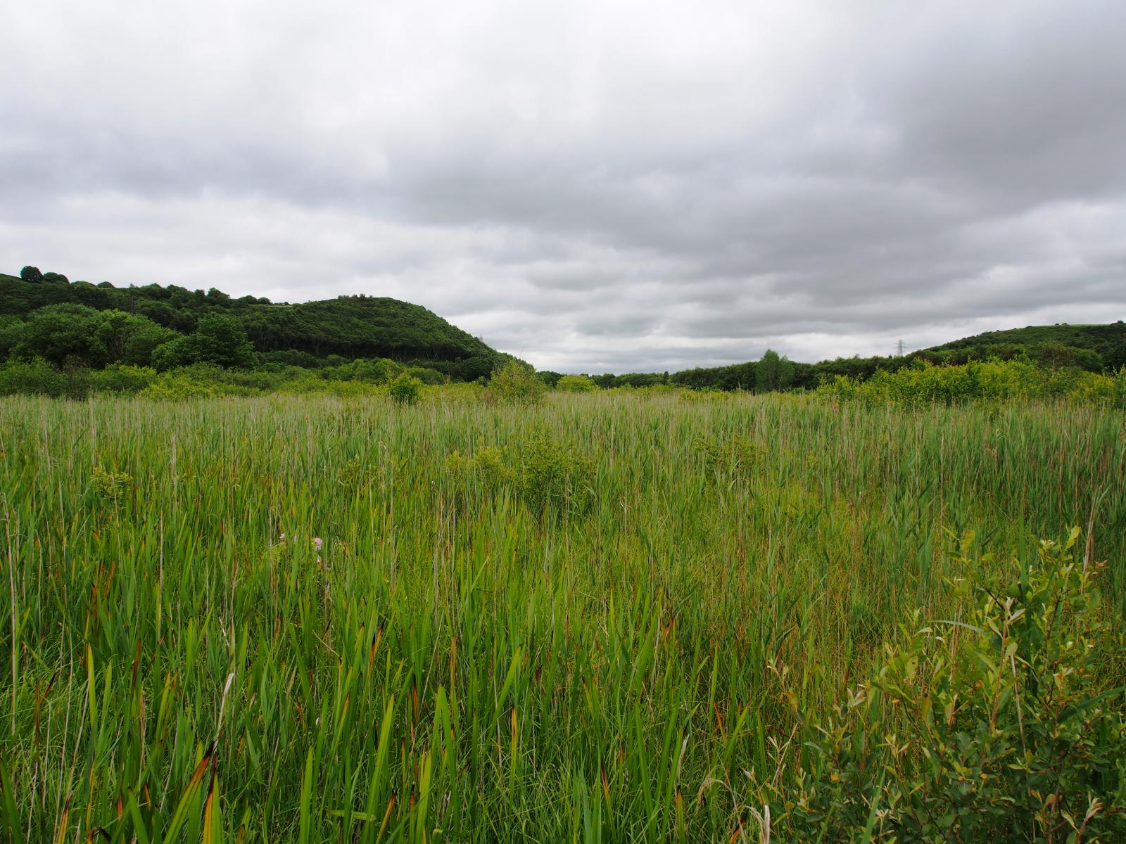 Marshland in New Jersey