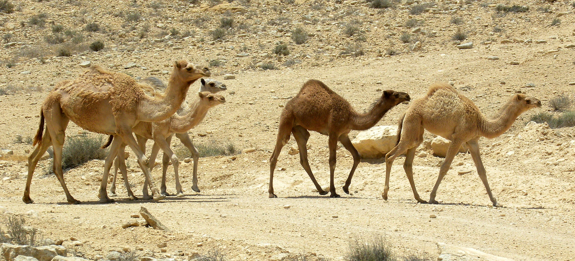 MERS Virus May Be Able To Spread Through The Air