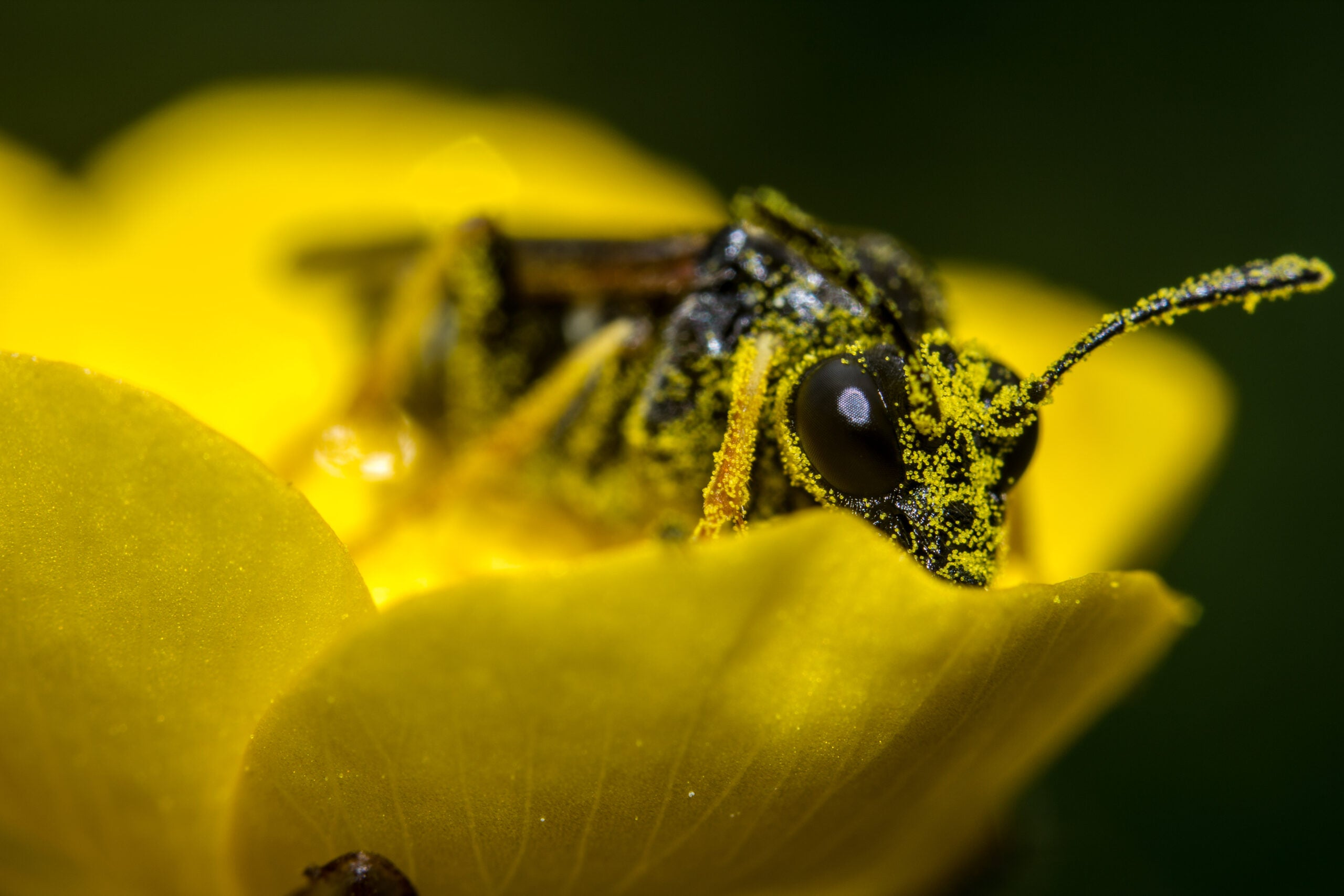 Pollen Can Now Be Turned Into Battery Parts