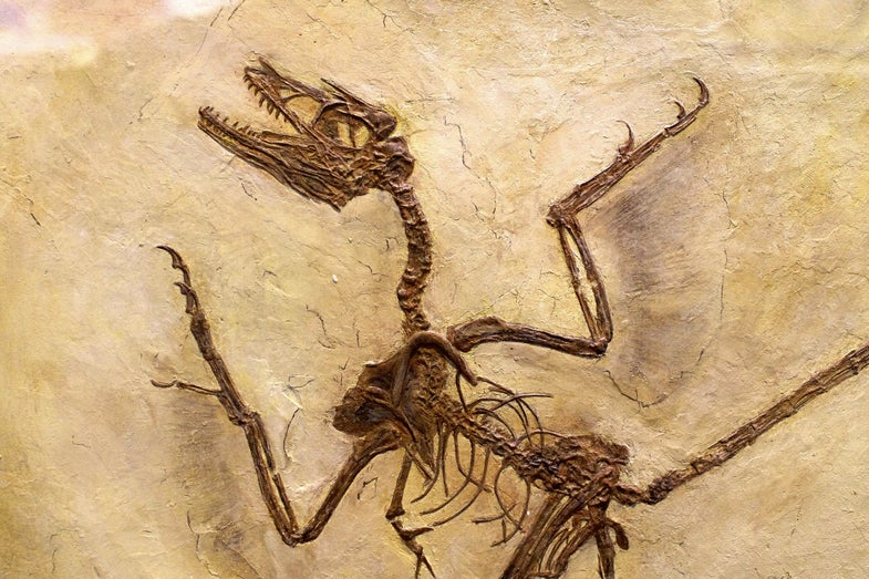 Scientists just discovered 125 million-year-old dinosaur dandruff
