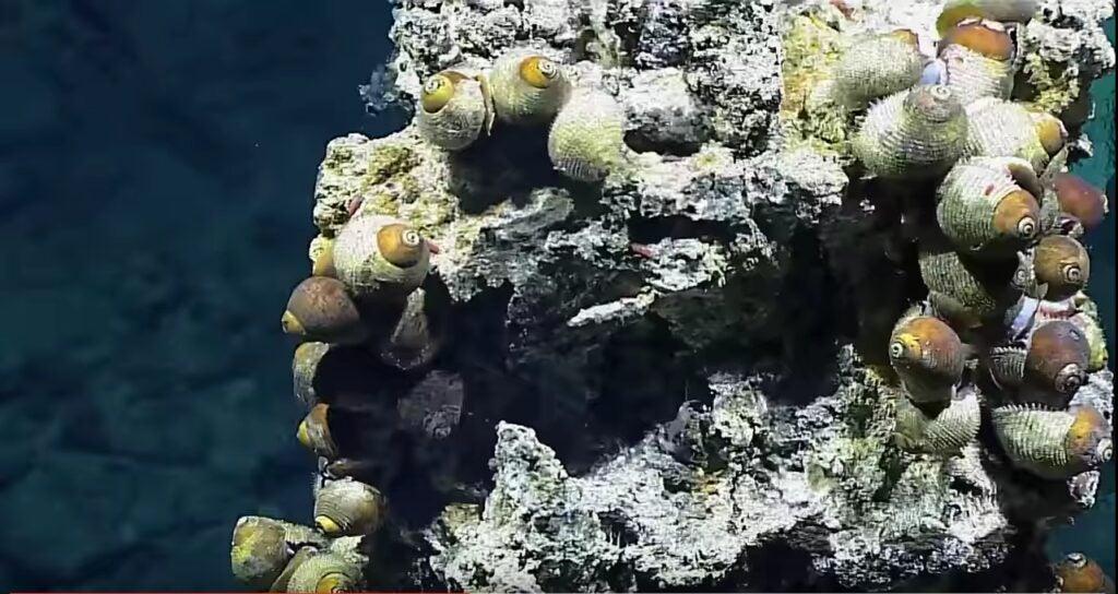 """""""Snails"""