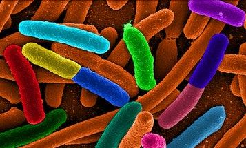 Researchers Wage Communication Warfare on Bacteria