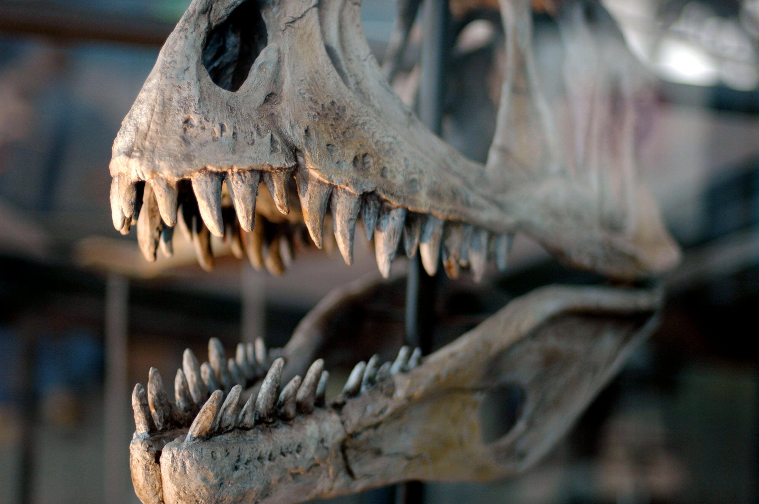 Nicolas Cage Is Returning A Stolen Dinosaur Skull To Mongolia