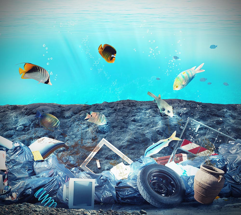 Why fish can't help but eat our plastic garbage